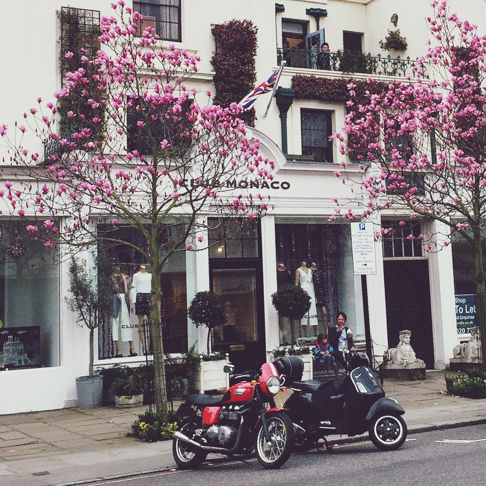 The pretty magnolia trees just about in full bloom on Westbourne Grove.