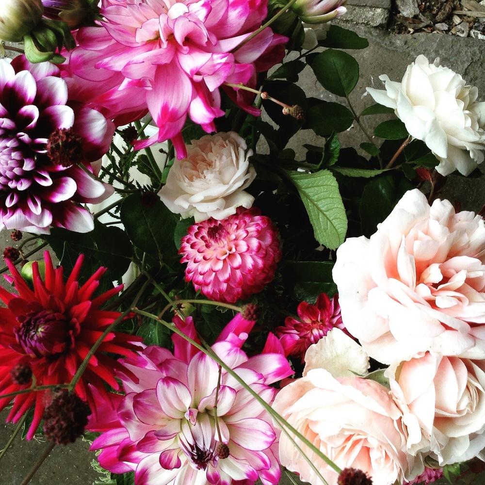 Autumn visions; dahlias and garden roses