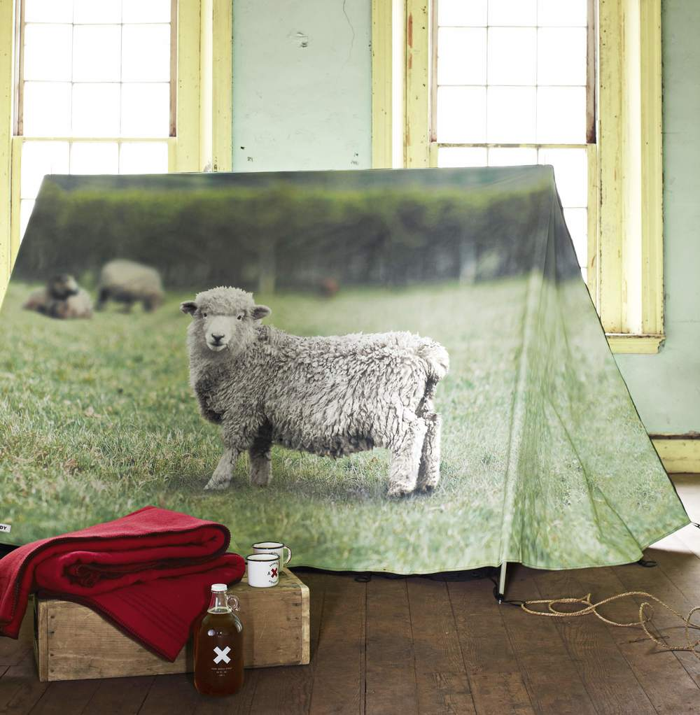 wcn sheep.jpg