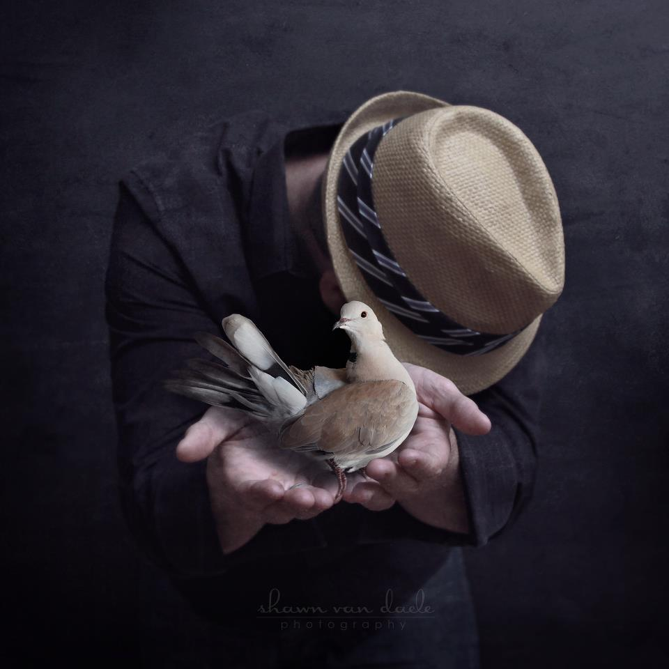 Dad's Dove