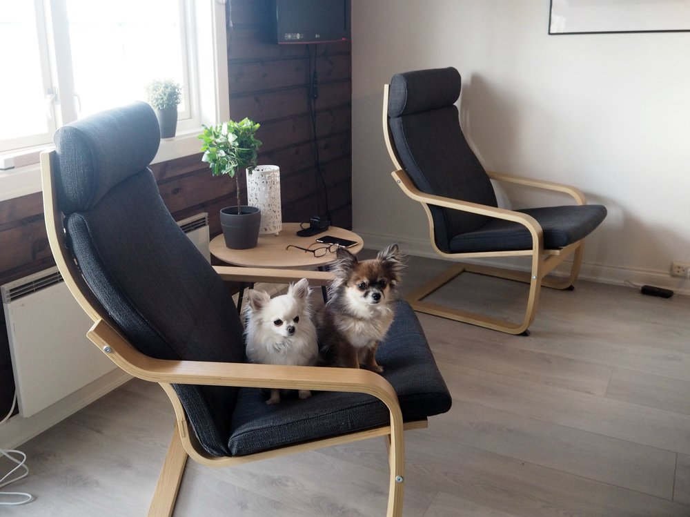 Hyttetur med chihuahua. Leid leilighet i Stølen. Ski in ski out
