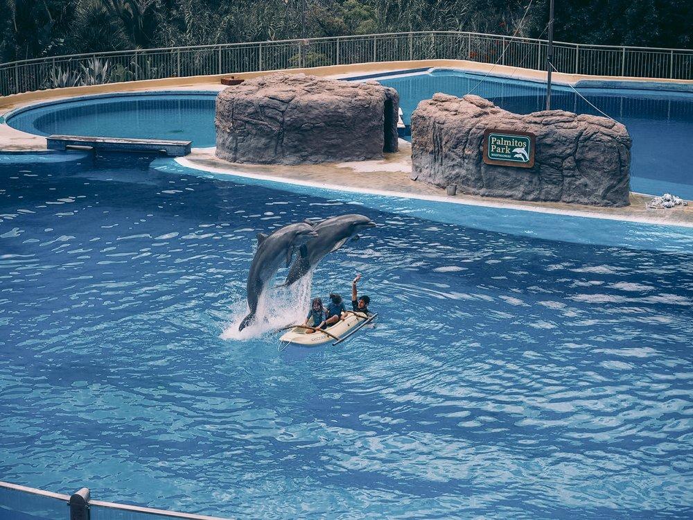 Palmitos Park, delfinshow, Dyrepark på gran canaria