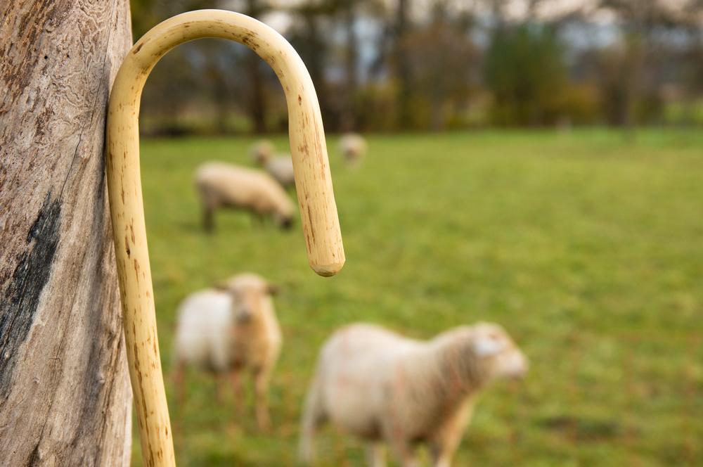 shepherd cane
