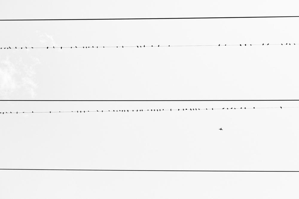 08214-birds-5622.jpg