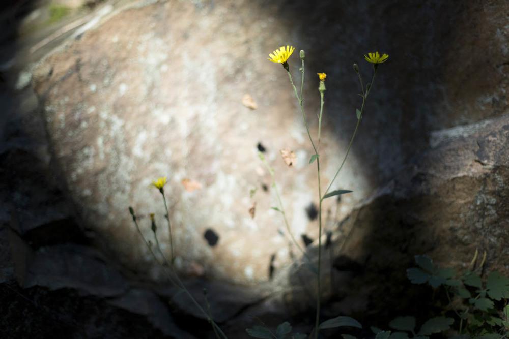 092715-mhd-trail-1686.jpg