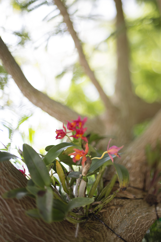 022816-fl-gardens--8713.jpg