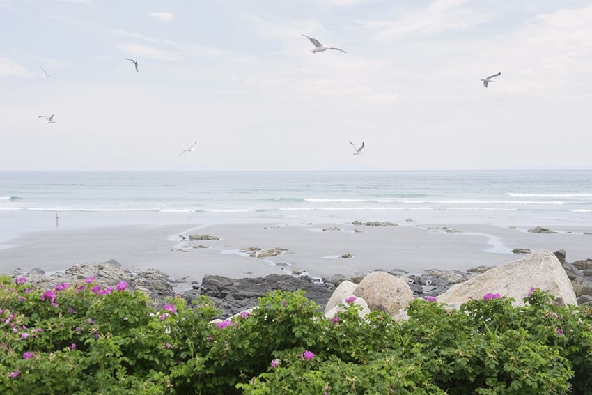 week26-pamelajoye-wild roses, seagulls, sea - long sands maine.jpg