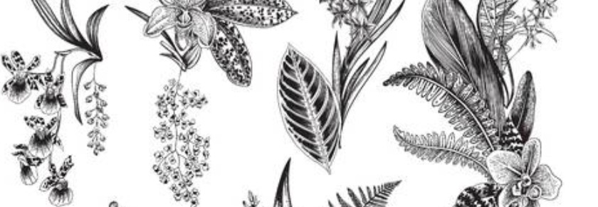 blk&wht botanical.jpg