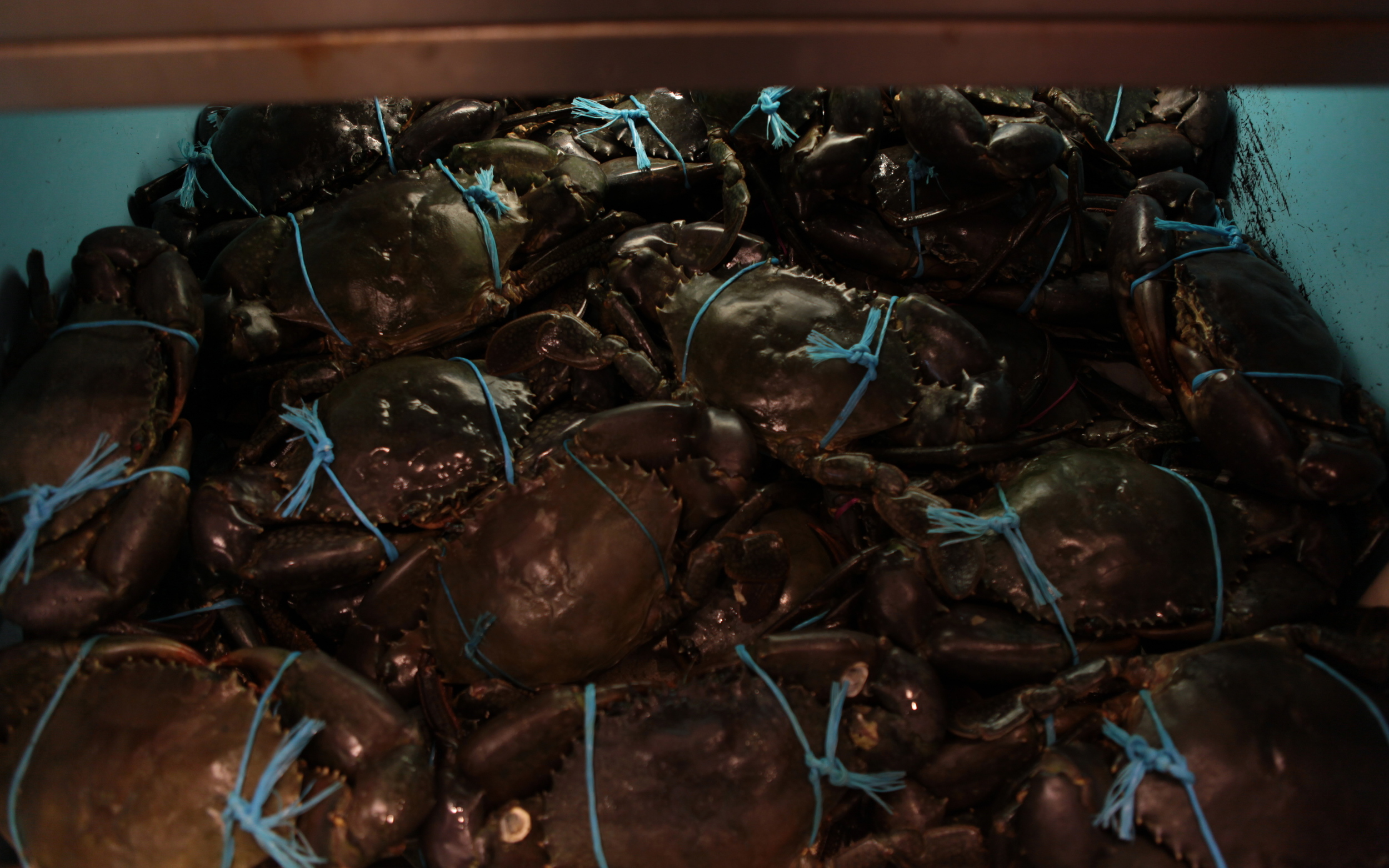 Endless Crabs