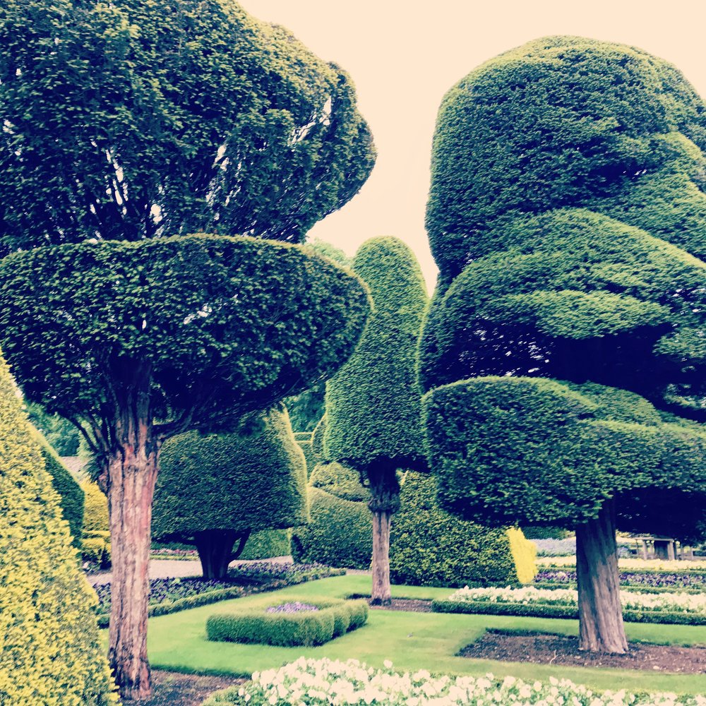 Topiary, Levens Hall, England.