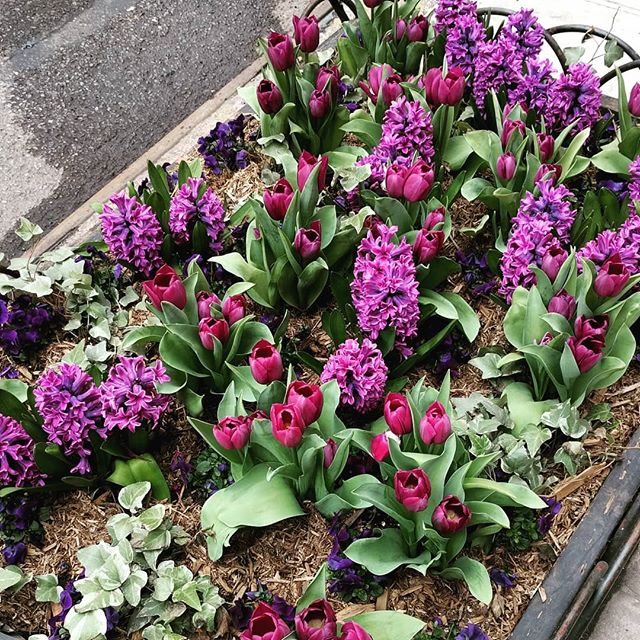 Spring! I know you're officially here, but if you could bring along your friends, sunshine and warm weather, we'd greatly appreciate it. 📷 of a beautifully curated flower box in the West village. NYC I will always love you. 😍😘 #spring #comesoonplease #🌞 #NotMilknyc #warmweathervibes #nyc #westvillage #nycfood