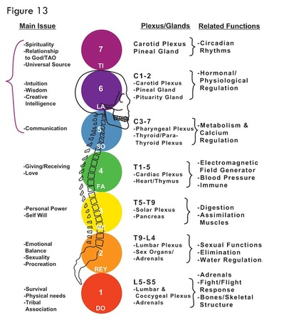 chakras + endocrine + nervous systems