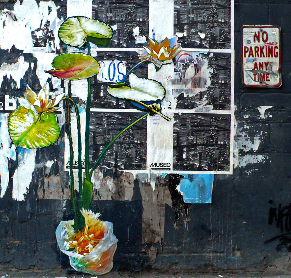Lily Lotus on 24th St., NYC