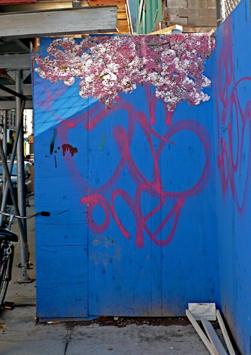 Thompson Street Cherry Tree, NYC