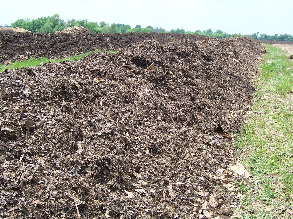 Early stage of compost