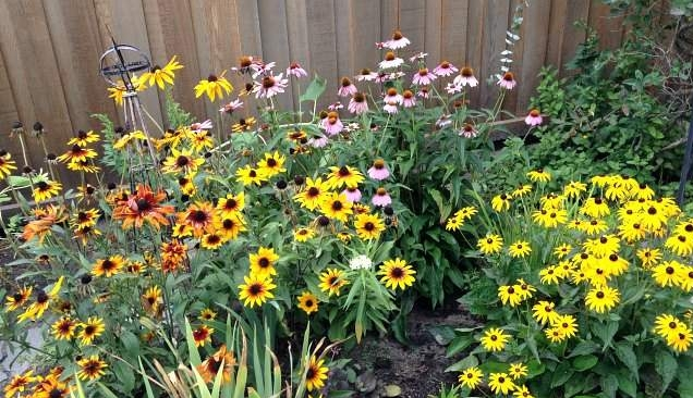 a-bee-garden-area-in-my-yard.jpg