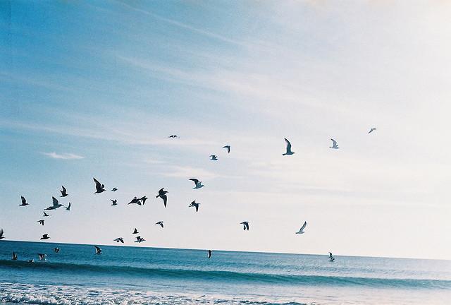 birds-ocean.jpg