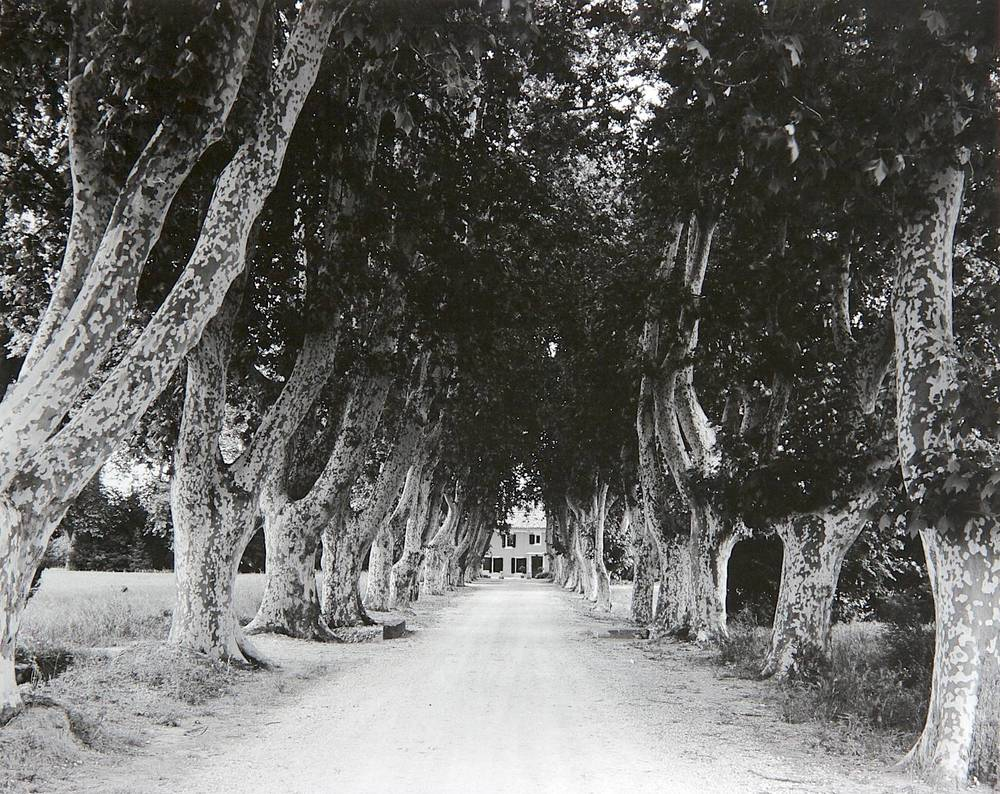 Tree-lined Drive (Graveson, France)