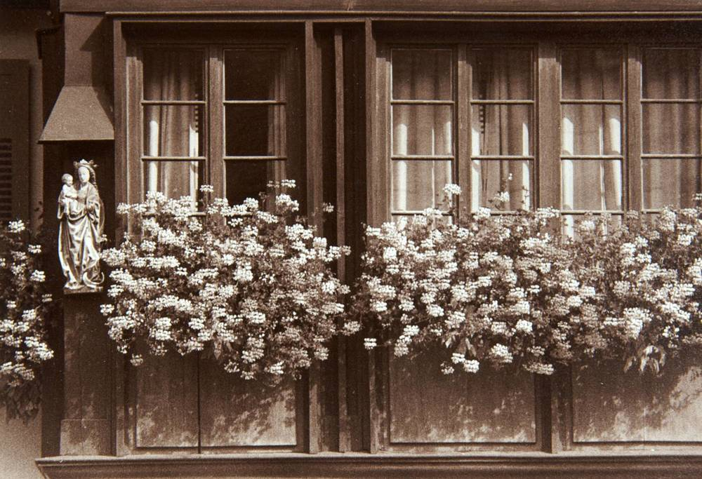 Window Flowers (Schiltach, Germany)