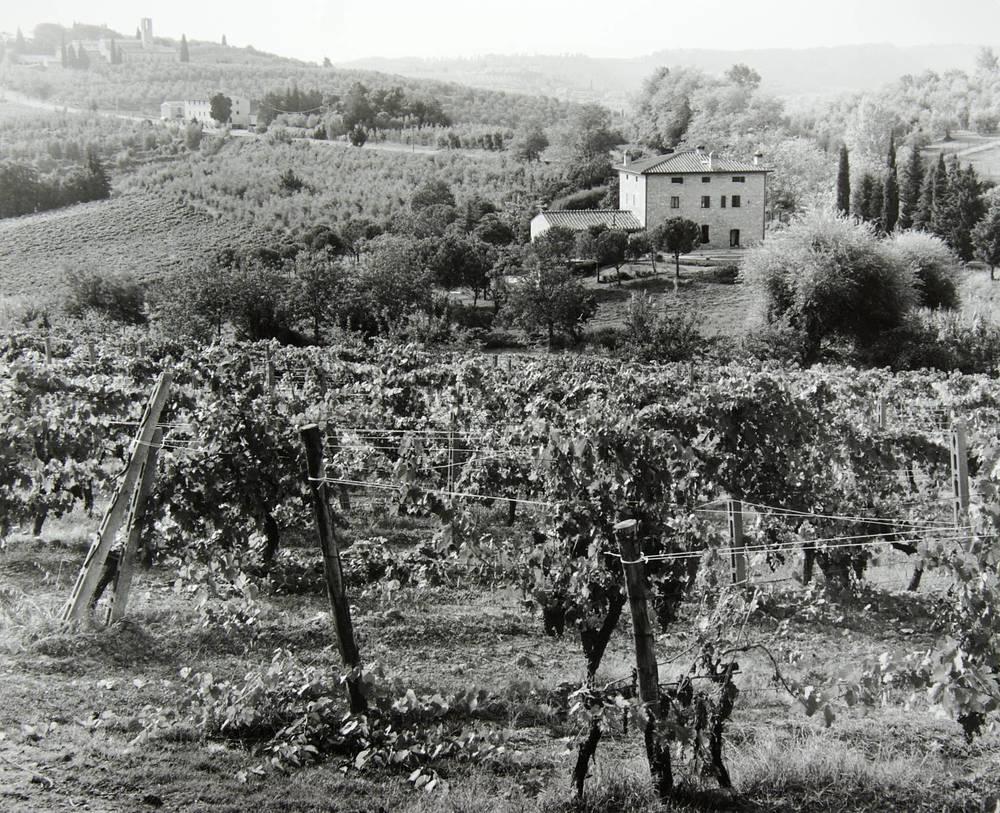 San Gimignano Countryside (Italy)