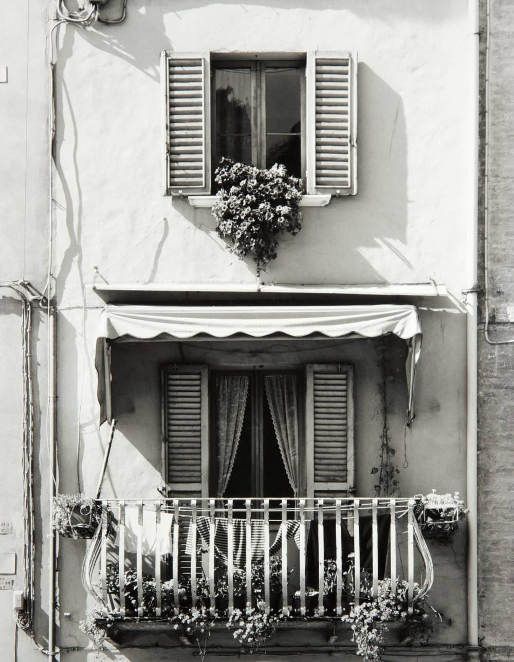 Window in Urbino (Italy)