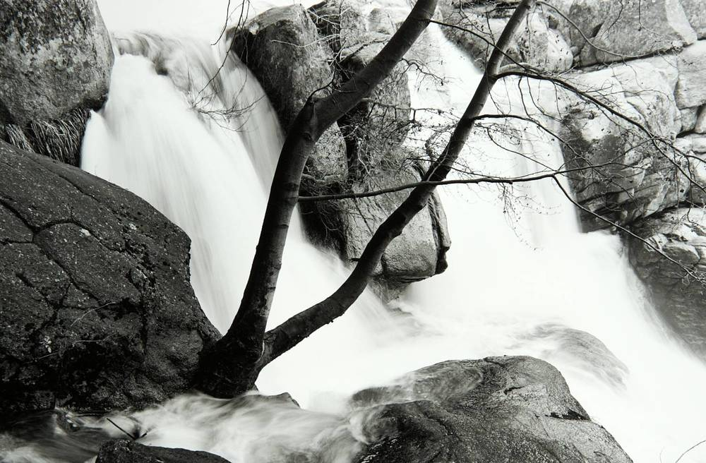 Tree on Cascade Creek (Yosemite National Park)