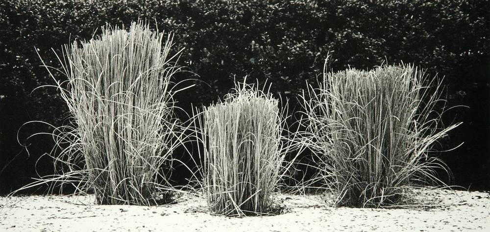 Grass (New York City)