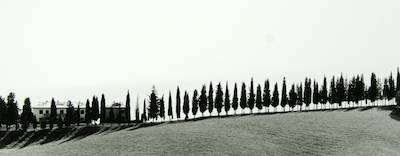 Cypress Horizon (Sughera, Italy)