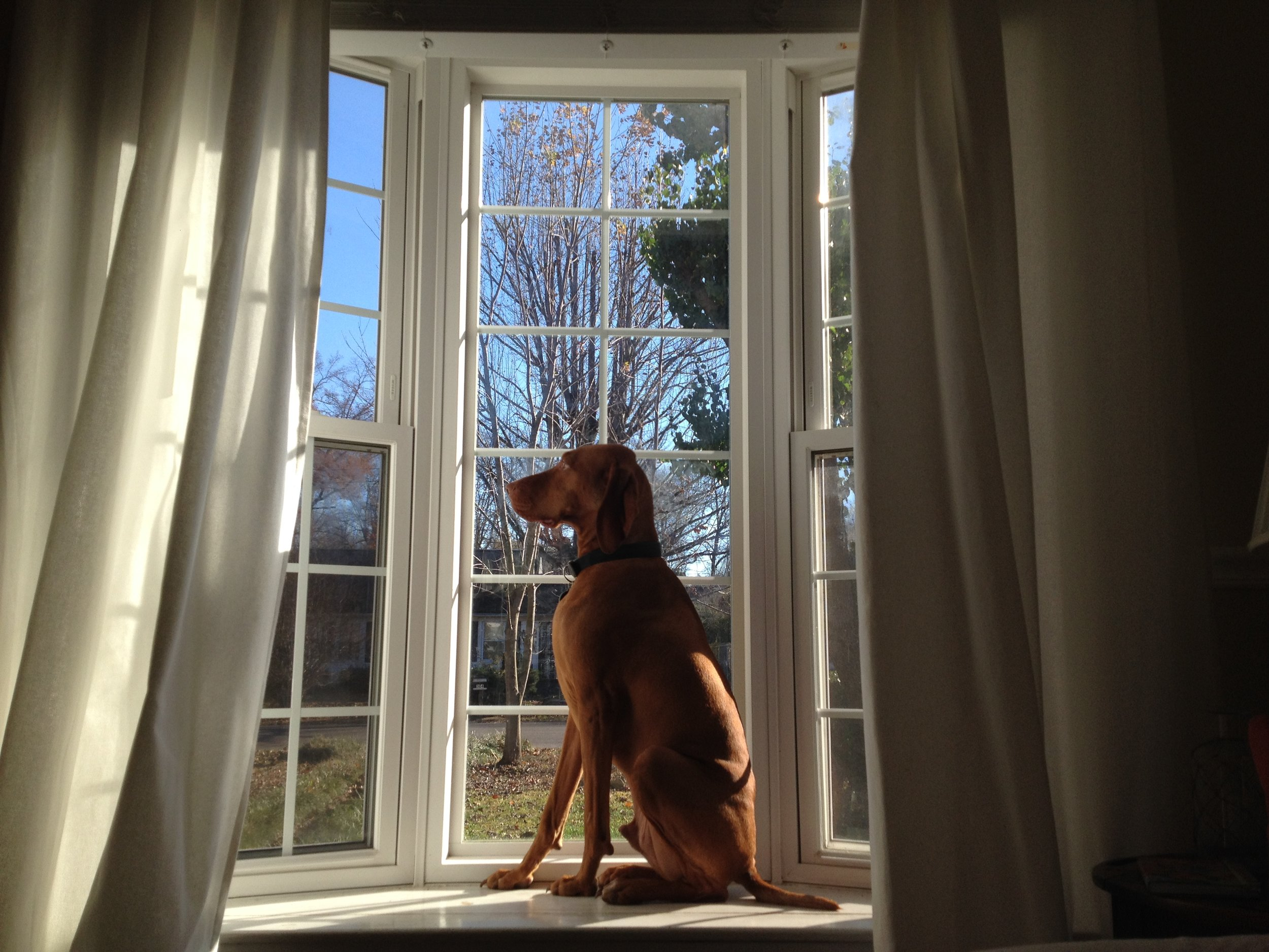 cooper in the sun