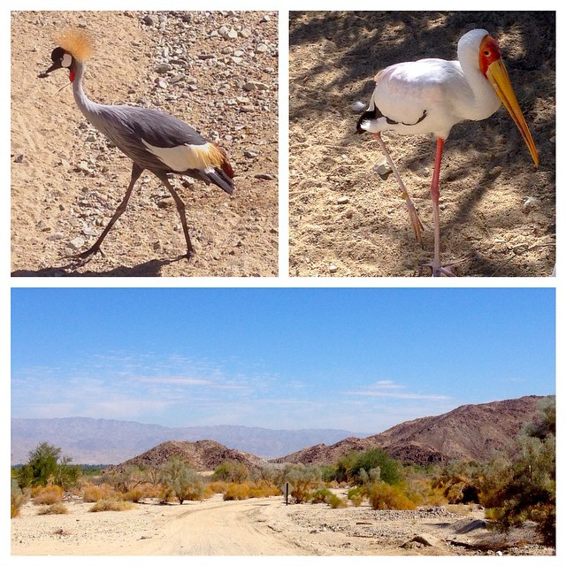 Made some new friends in the desert this weekend.