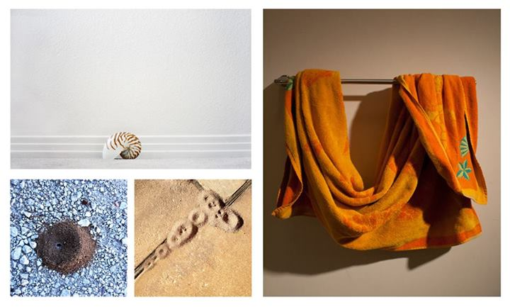 (Top left) Daniela Galindo, Nautilus, 2012 (Bottom left) Matthew McEver, Ants # 3, Ants # 19, 2013 (Right) Shawn Mayer, Towel Study #6, 2014