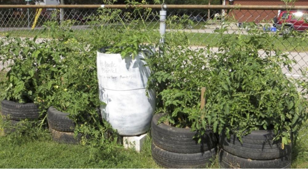 alternate planting methods: rain barrel, used tires