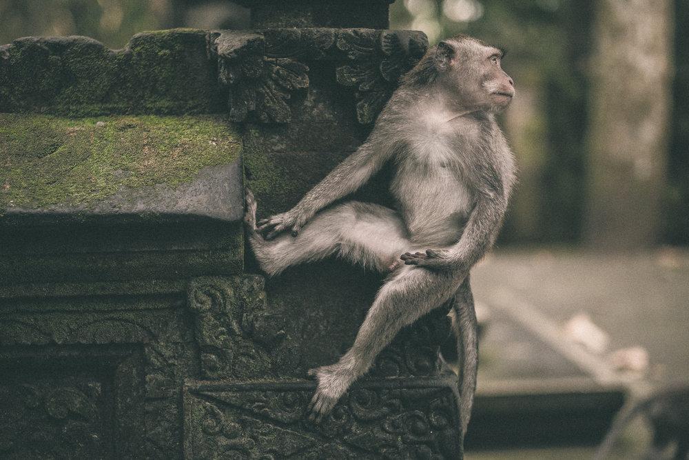 bali_day9_monkey-6.jpg