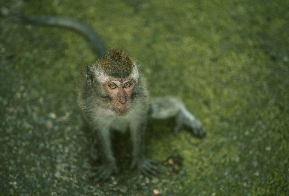 bali_day9_monkey-7.jpg