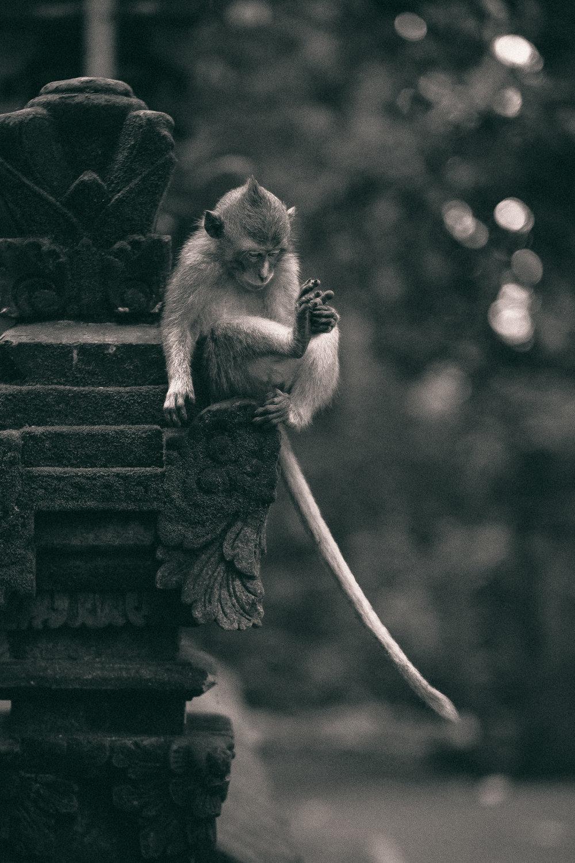 bali_day9_monkey-8.jpg