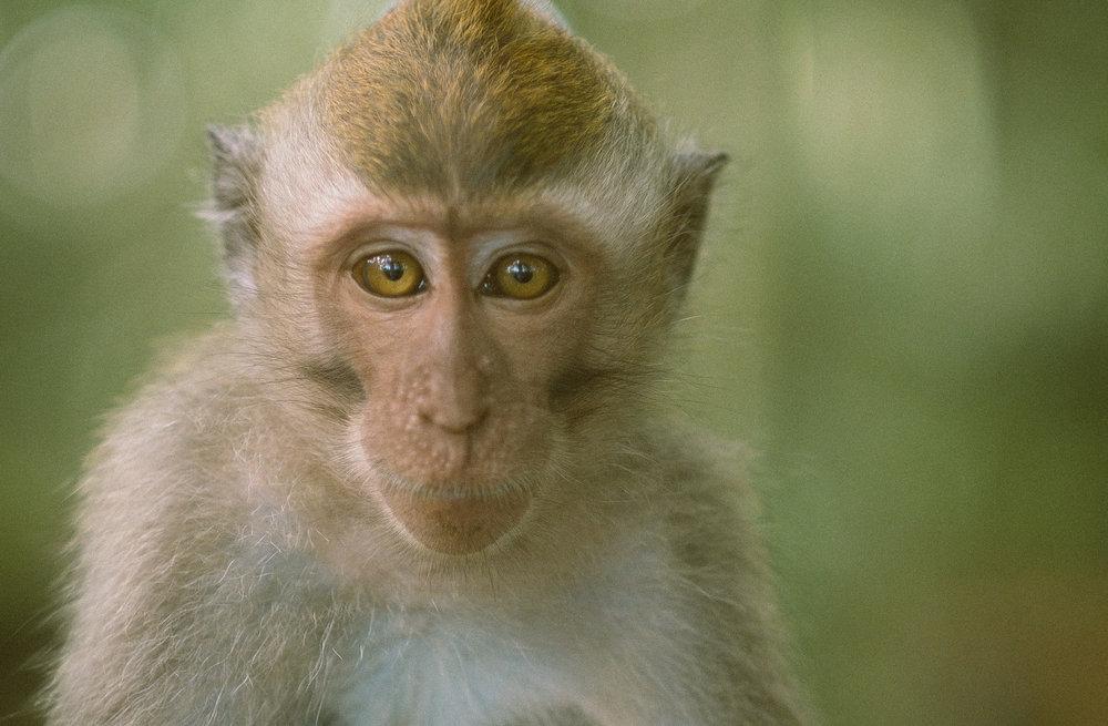 bali_day9_monkey-15.jpg
