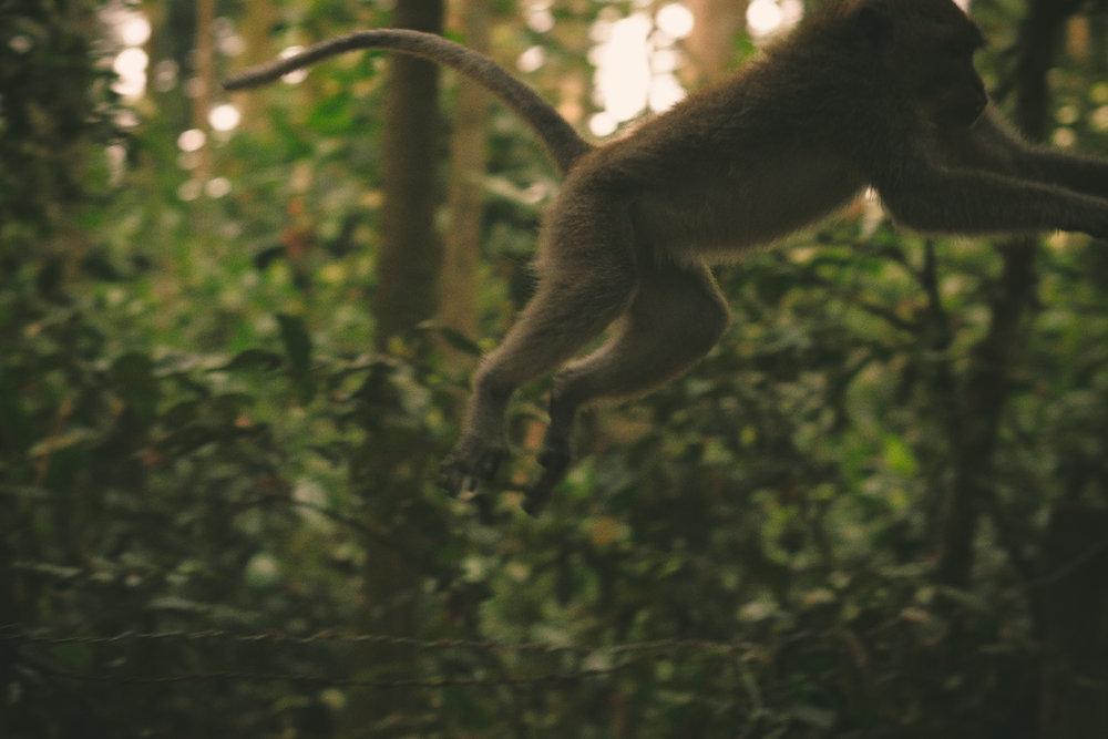 bali_day9_monkey-18.jpg