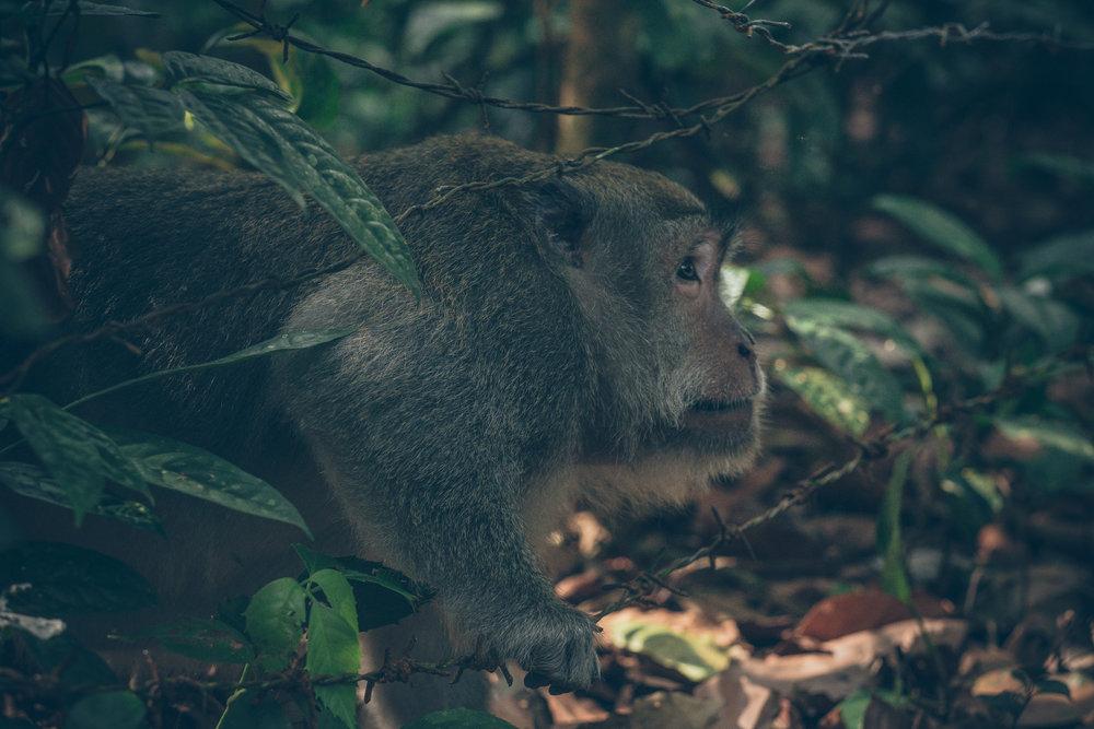 bali_day9_monkey-20.jpg