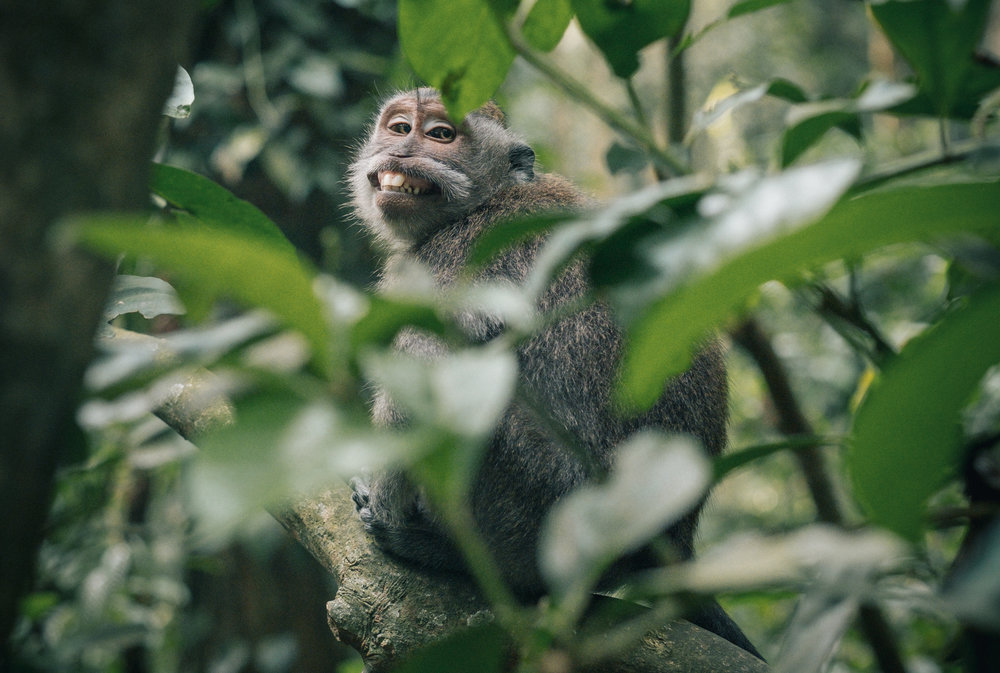 bali_day9_monkey-23.jpg