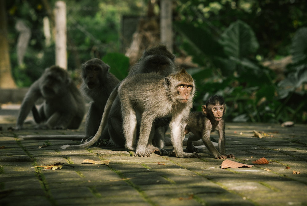 bali_day9_monkey-24.jpg