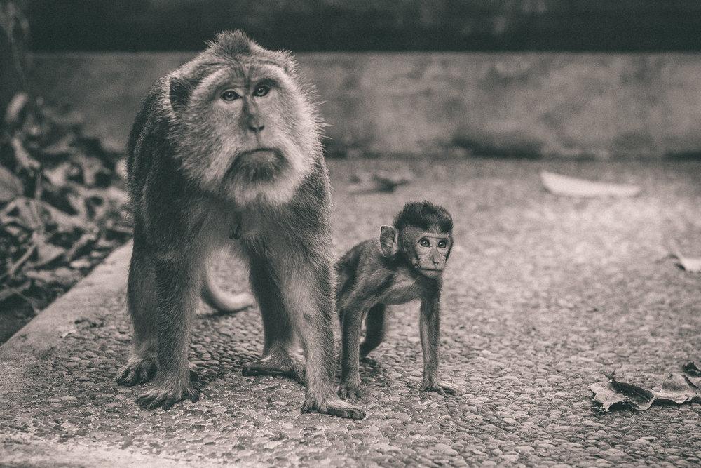 bali_day9_monkey-25.jpg