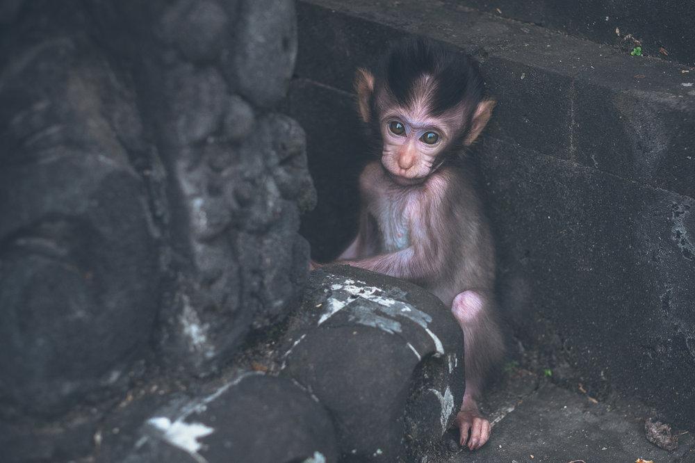 bali_day9_monkey-31.jpg
