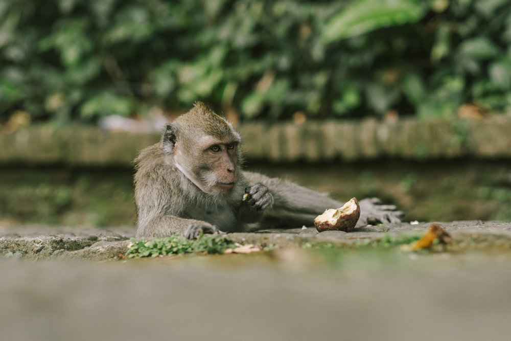 bali_day9_monkey-37.jpg