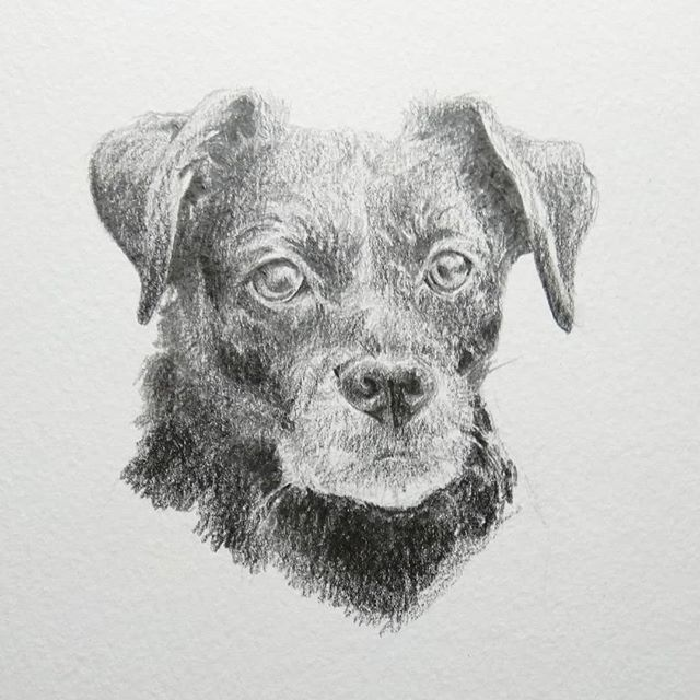 This is the portrait of Lucy I did for Jimmy's Christmas present this year.  #pencil #drawing #petportrait #dogportrait