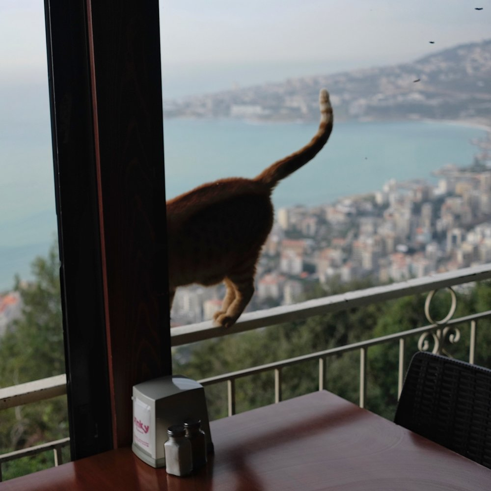 Cat tail and Beirut view.