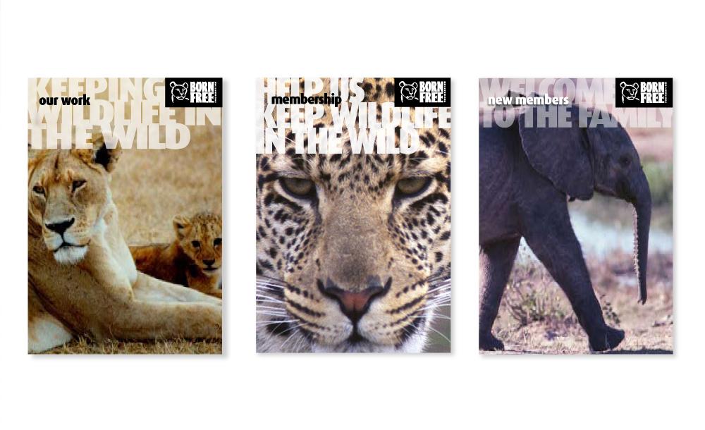 BPCC-WEB-BFF-literature.png