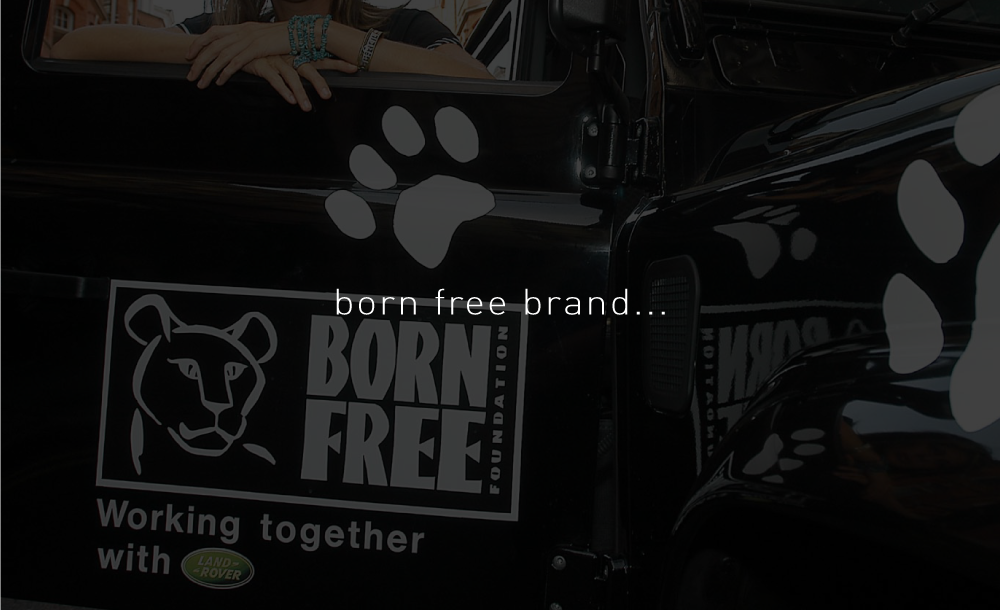00-BPCC-WEB-BFF--section-BRAND.png