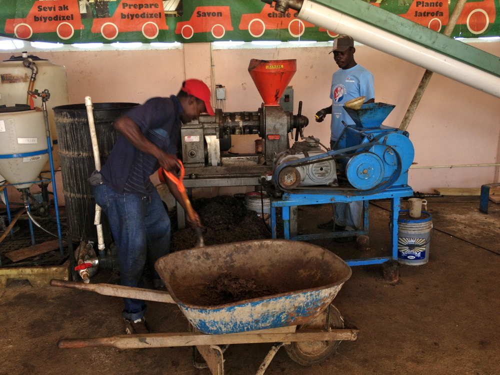 Pressing oil from Jatrofa seeds