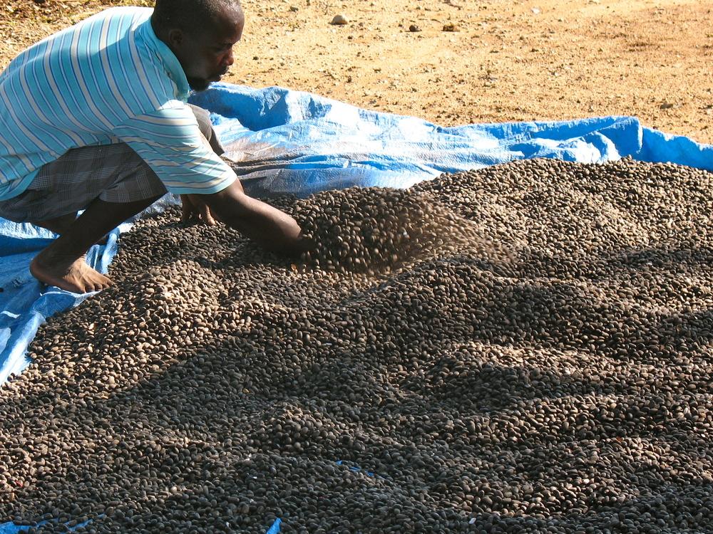 Selling Jatrofa seed