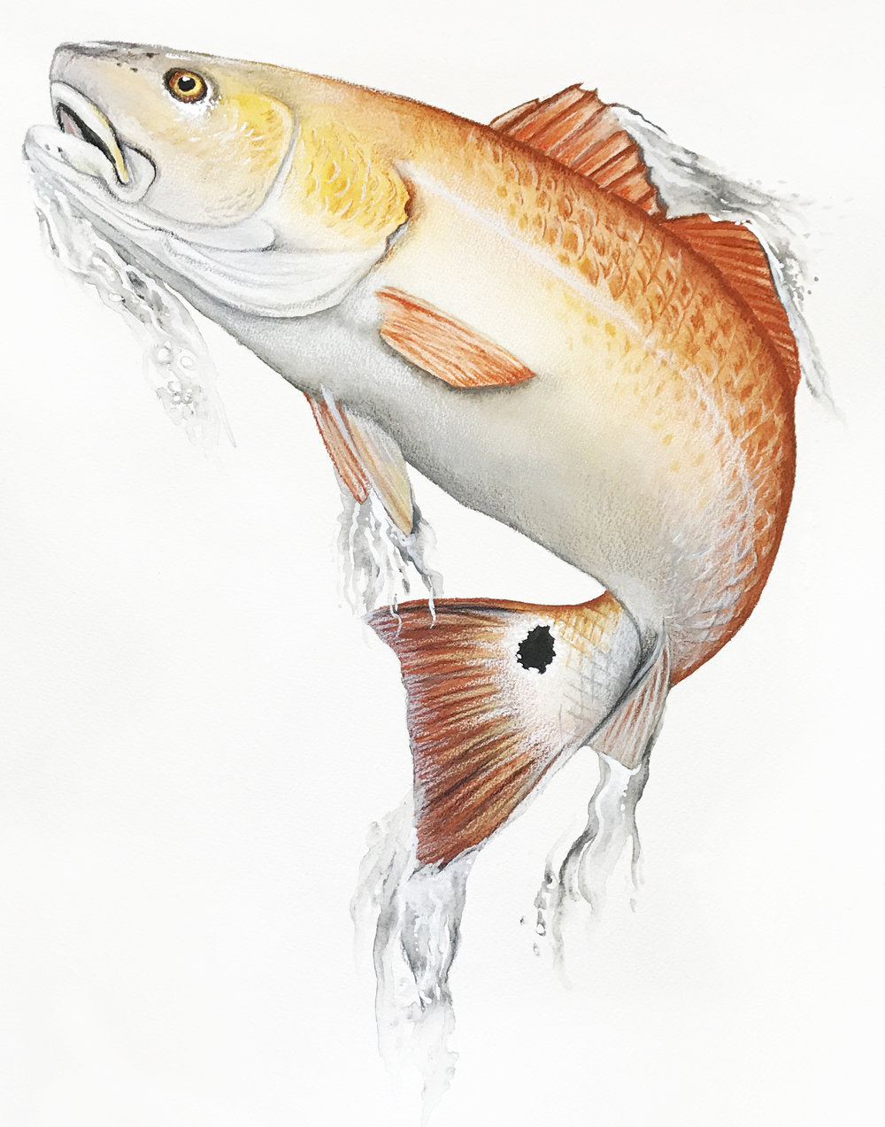 RedFish_8x10.jpg